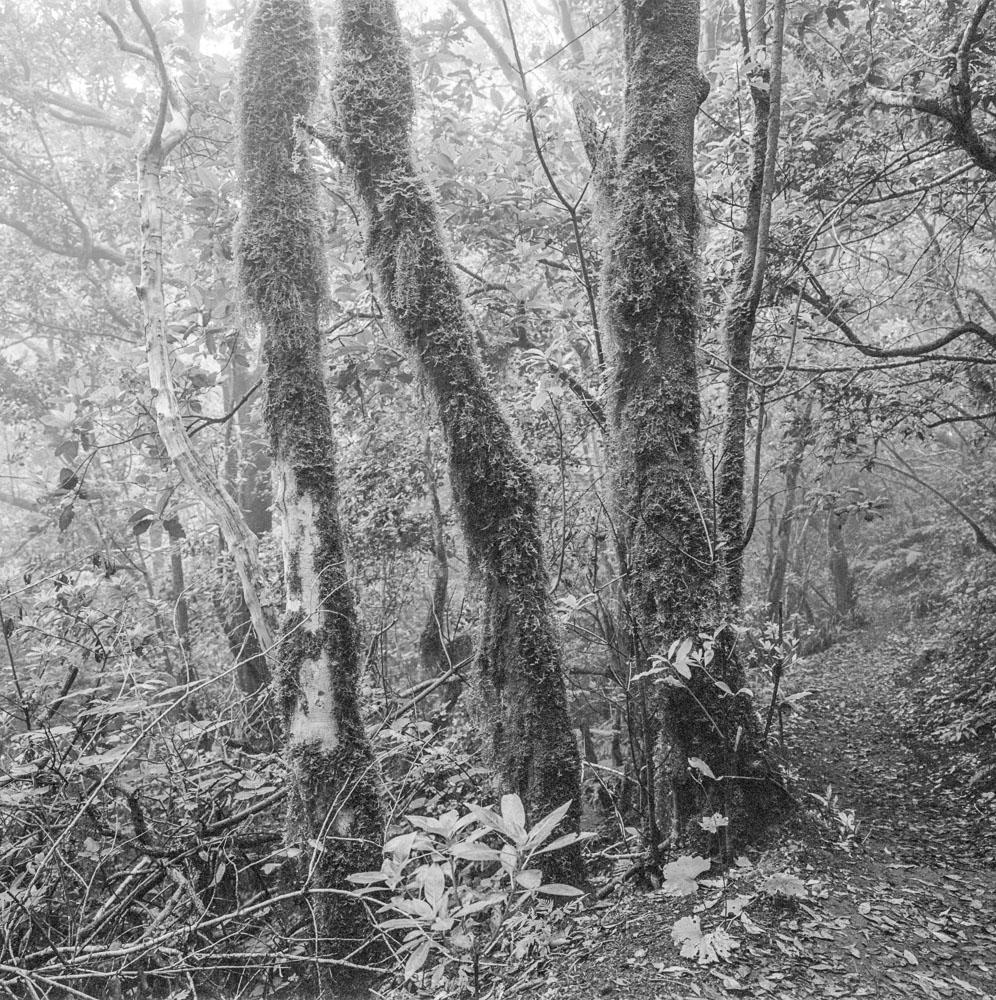 036-KodakTmax400