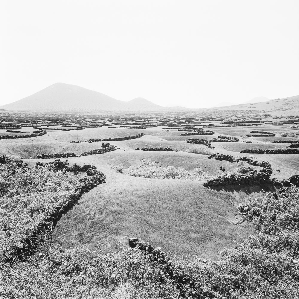 291-KodakTri-x400