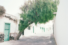 322a-KodakPortra400