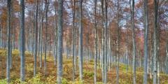 _MG_8662-63-64_Panorama1
